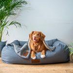 Aqua Paws Canine Wellness